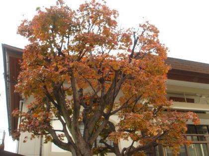 平成28年紅葉の景色