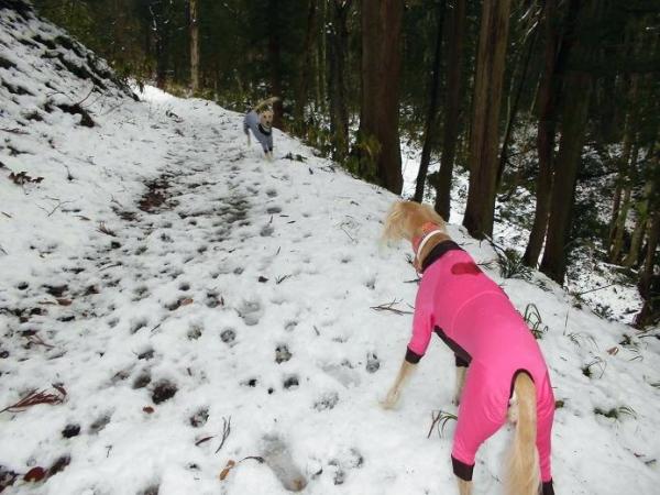 冬が来る前の里山トレッキング15