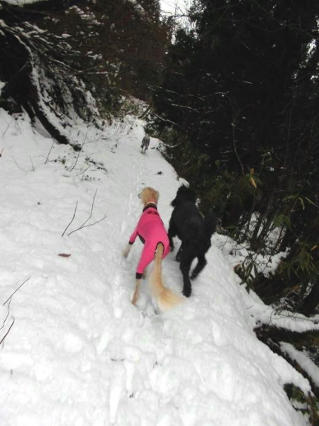 冬が来る前の里山トレッキング16