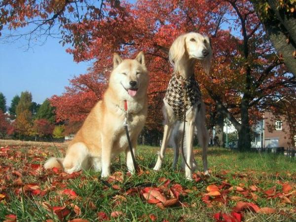 秋を楽しもう24