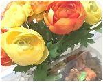 エミリオ・ロバの花が想像以上にキレイやった