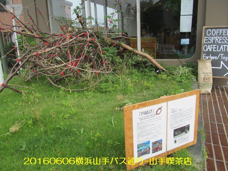 20160606bochi03.jpg