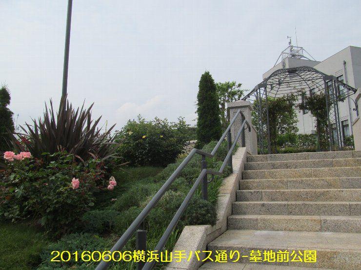 20160606bochi05.jpg
