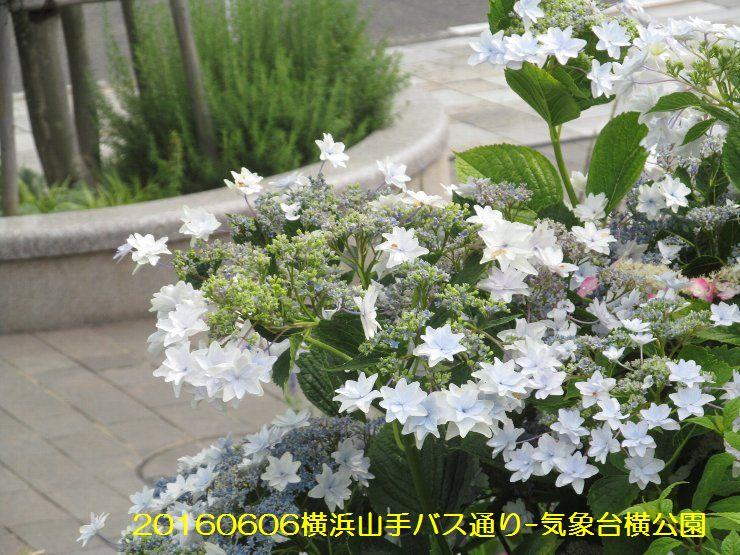 20160606bochi07.jpg