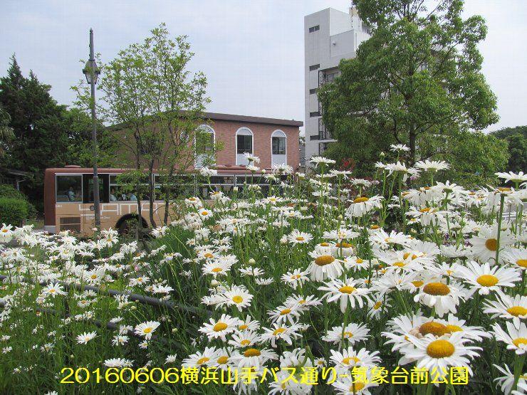 20160606bochi08.jpg