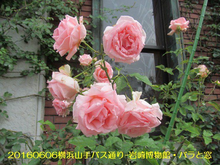 20160606bochi10.jpg
