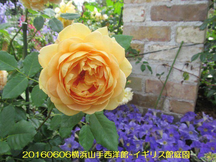 20160606eyi03.jpg