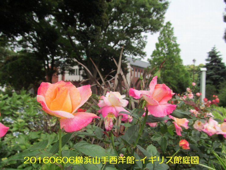20160606eyi05.jpg