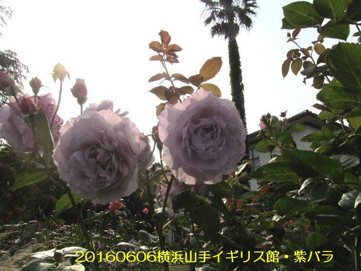 20160606eyi09.jpg