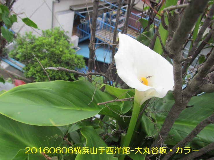 20160606yk02.jpg