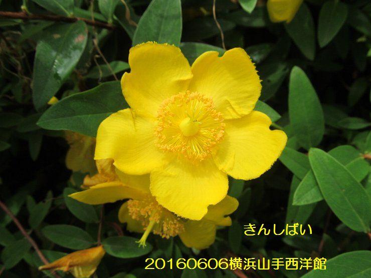 20160606yk04.jpg