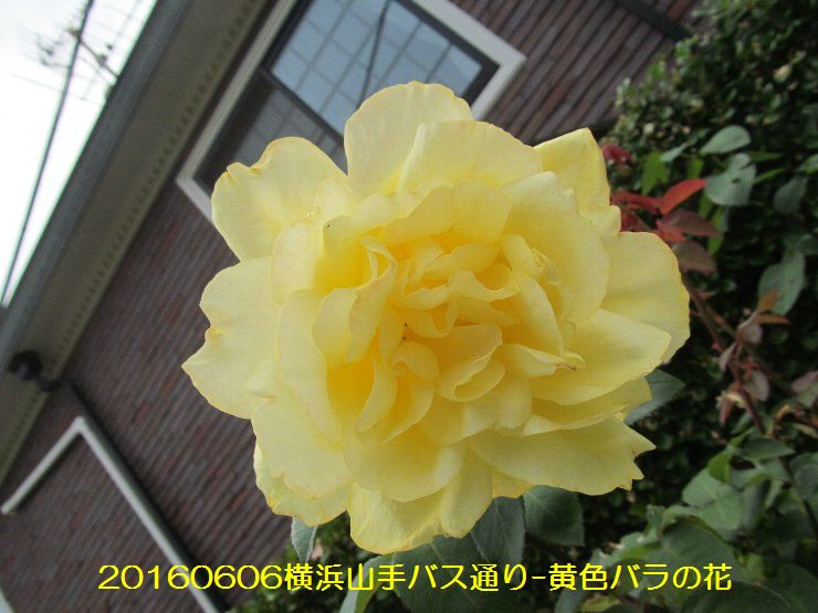 20160606ymt09.jpg