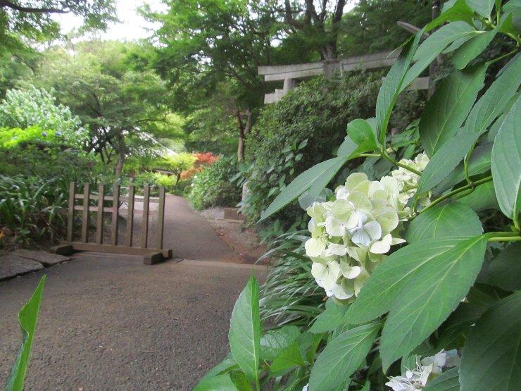 20160708jyokei-02.jpg