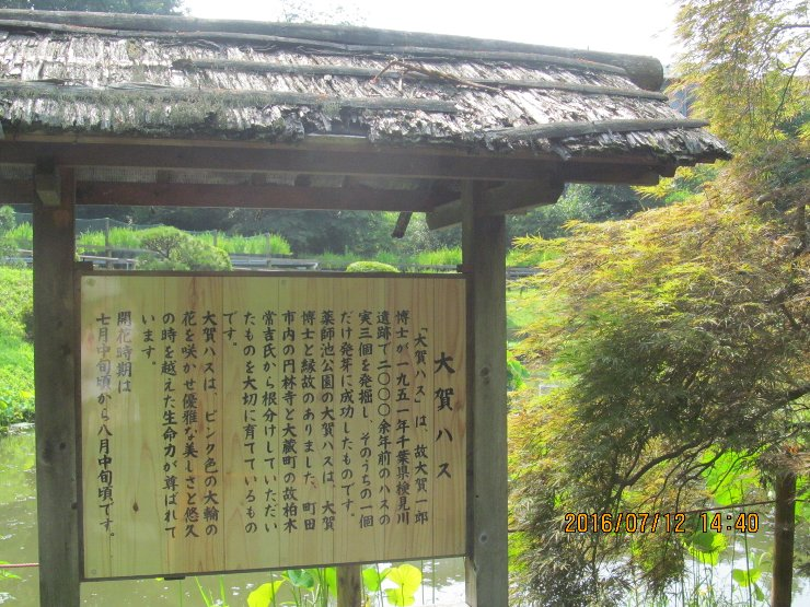 20160712yakushi03.jpg