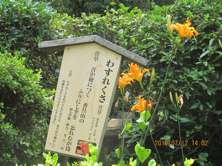 20160712yakushi14.jpg
