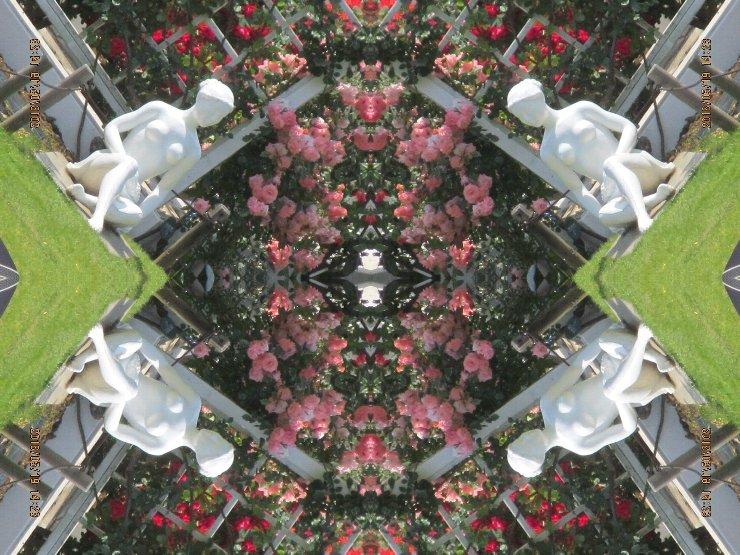 rose4-41s.jpg