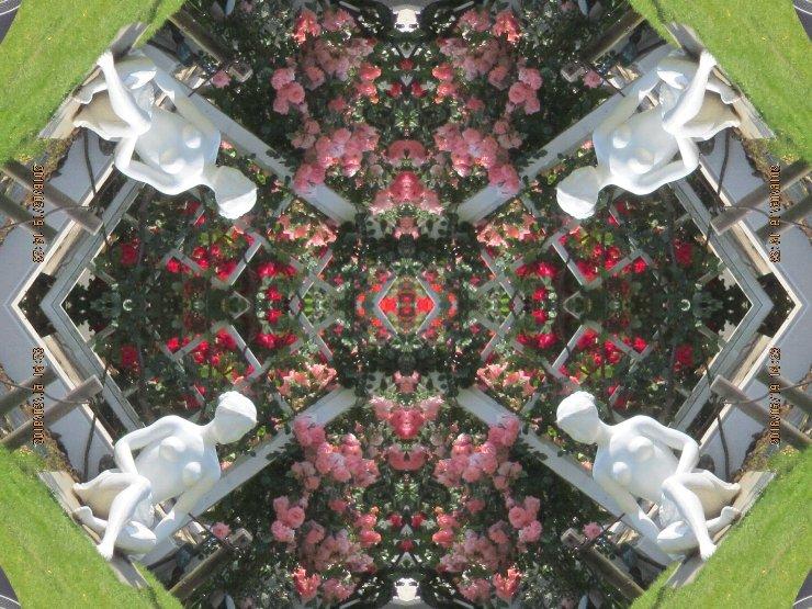 rose4-42s.jpg