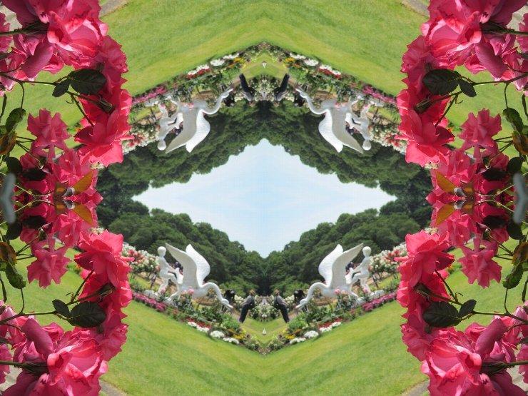 rose4-47s.jpg
