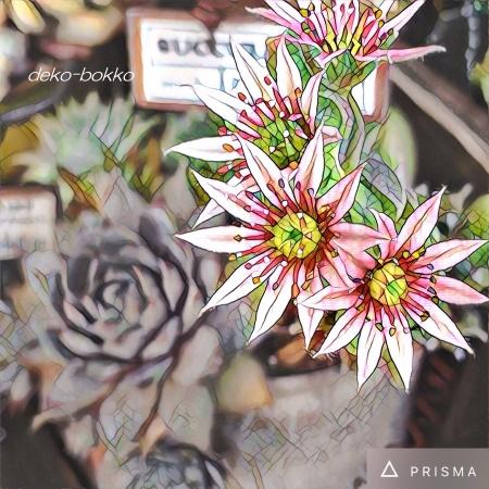 PRISMA センペル 花 201607
