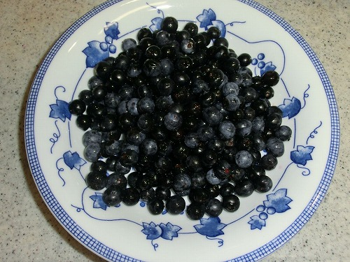 blueberry0811_2016_2.jpg