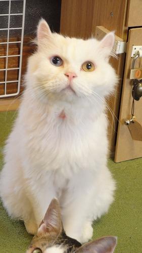 cat_cafe0717_2016_1.jpg
