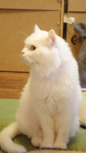 cat_cafe0717_2016_2.jpg