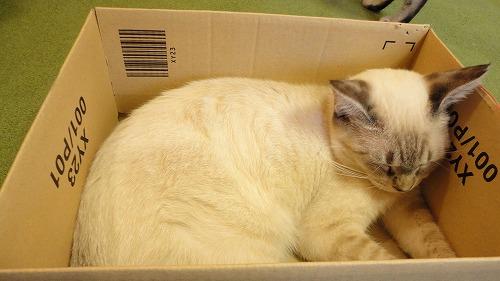 cat_cafe0717_2016_3.jpg