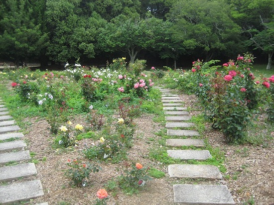 バラ016公園
