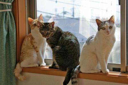 うちの猫写真 276
