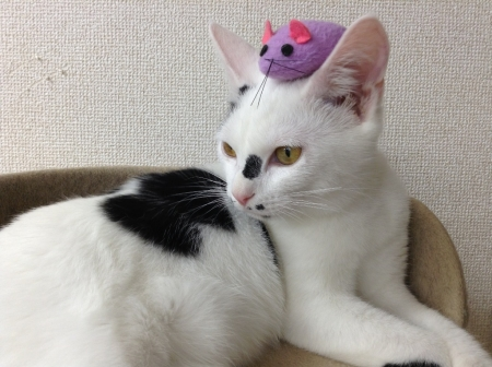 daisuke1.jpg