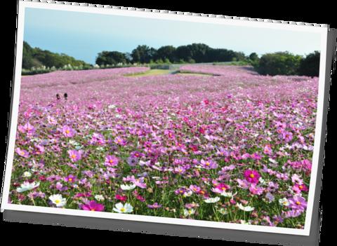 花さじき11-01