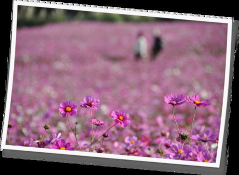 花さじき11-03