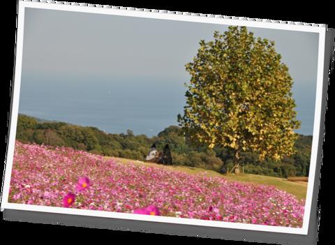 花さじき11-07