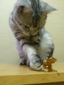 猫 ビーズ 3