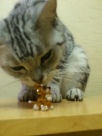 猫 ビーズ 1