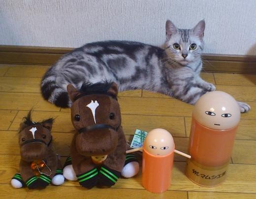ジャスタウェイ 猫