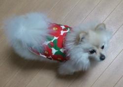 お姫様5号 犬