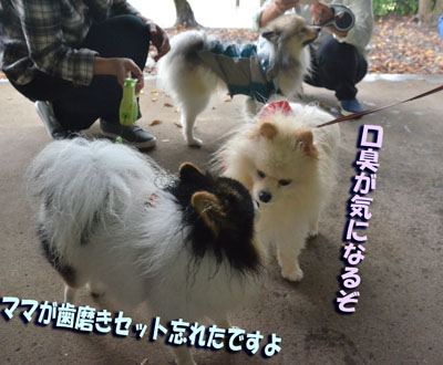 DSC_1980_201610102058576e9.jpg