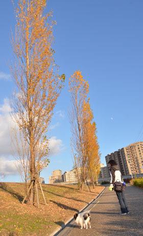 DSC_5303.jpg