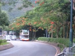 DSC_0191鳳凰樹とバス