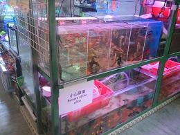 DSC_0040 (1)Yat Tung 金魚屋