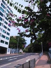 DSC_0002 (1)城市大学付近