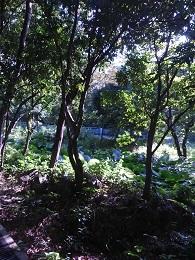 DSC_0003東涌 waiking course