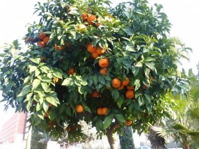 ビターオレンジ 2016 3・25