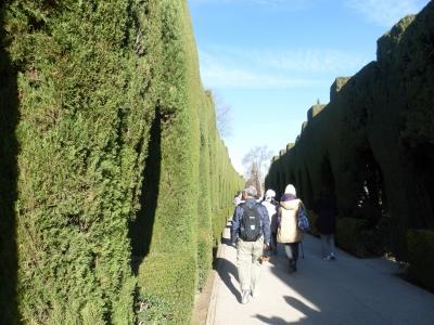 糸杉の城壁 2016 3・25