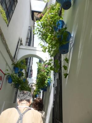 コルトバ② 花の小道 2016 3・26