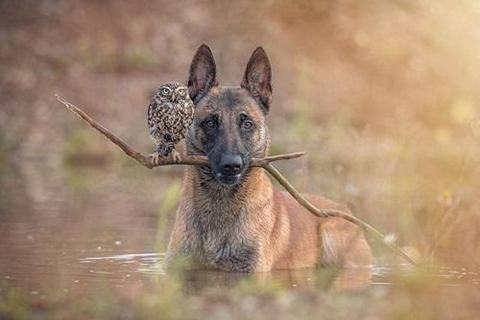 フクロウと犬 (480x320)