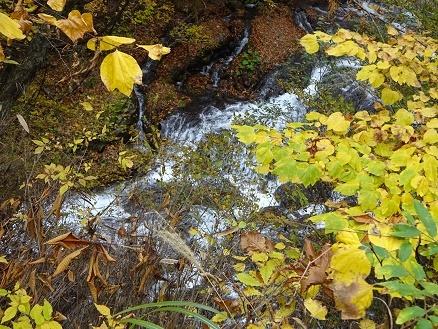 魚留の滝16