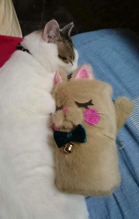 テブルカバーと猫