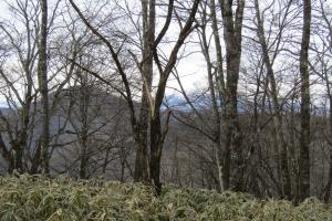 161204山s (3)